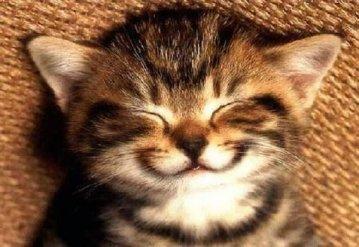 cat smiling